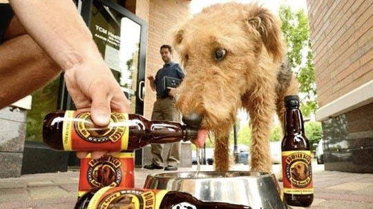 cerveza_mascotas_agropecuaria